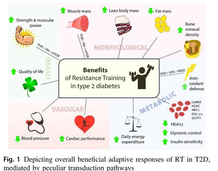 Resistance training a key if you have Tyoe 2 Diabetes   <a href='https://link.springer.com/article/10.1007/s12020-018
